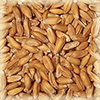 СОЛОД ШАТО СПЕЛТ НАТЮР (органический пшеничный)