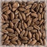 СОЛОД ШАТО СПЕЛТ (пшеничный)