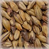 CHÂTEAU AROME (焦香麦芽) NATURE