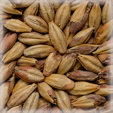 CHÂTEAU MELANO (类黑素麦芽)