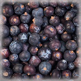 JUNIPER BERRIES ORGANIC (杜松子)